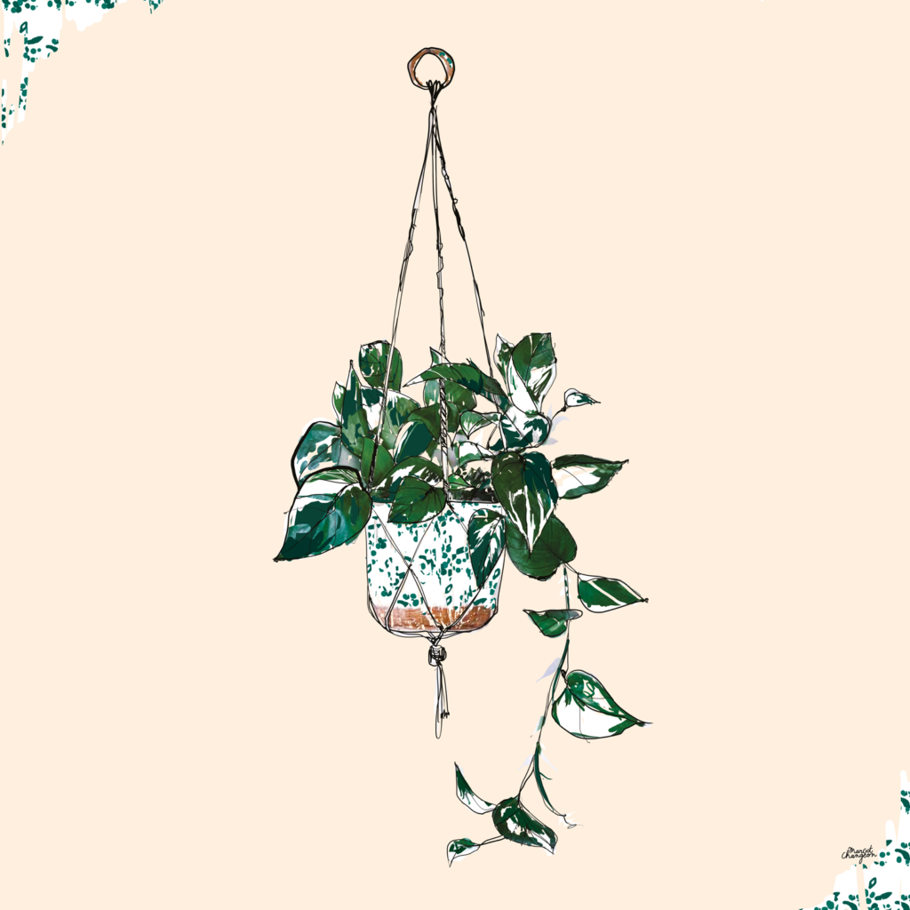Illustration plante nature par Margot Changeon